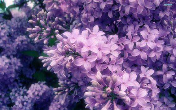 Lilac Live Wallpaper poster