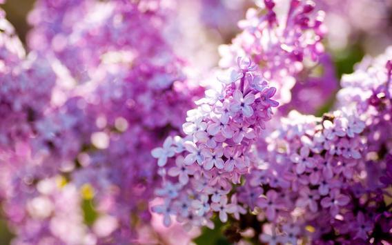 Lilac Live Wallpaper screenshot 3
