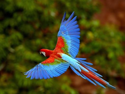 Parrot Bird Live Wallpaper screenshot 1