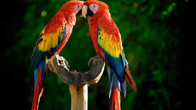 Parrot Bird Live Wallpaper screenshot 2