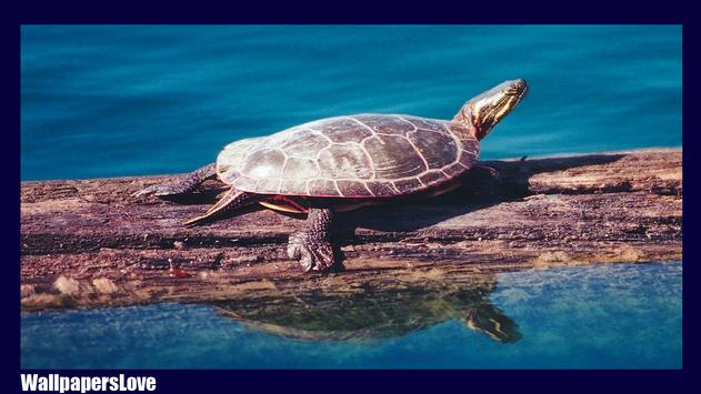 Turtle Live Wallpaper apk screenshot