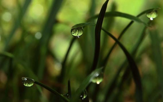 Green Grass theme screenshot 2