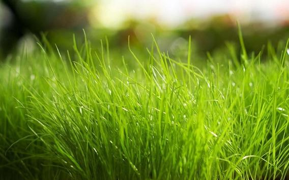 Green Grass theme screenshot 7