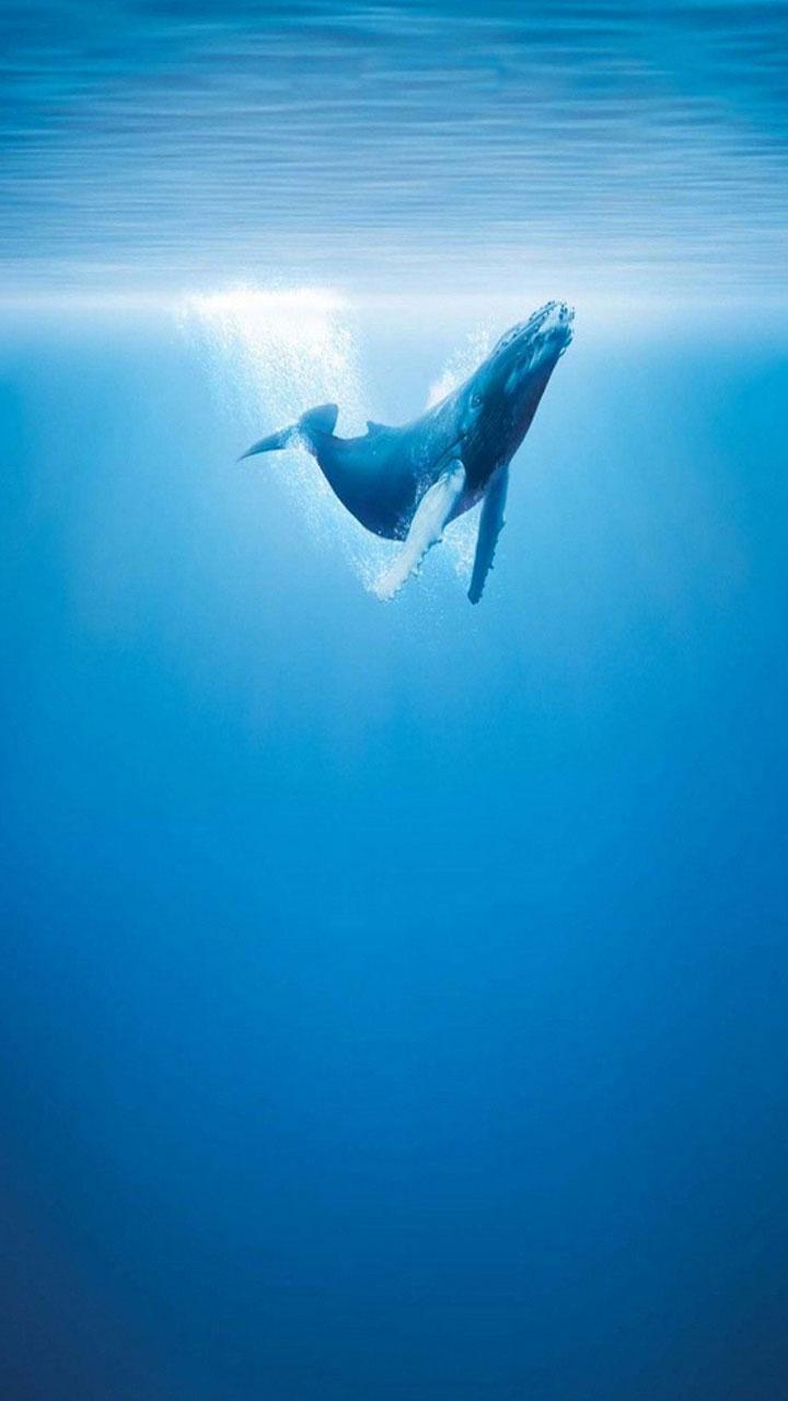 Baleine Fond\'Ecran Animé pour Android - Téléchargez l\'APK