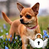 Chihuahua Love Muzzle Puppy Home Lock Screen icon