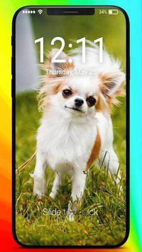 Chihuahua Love Muzzle Puppy Home Lock Screen poster