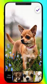 Chihuahua Love Muzzle Puppy Home Lock Screen screenshot 2