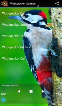 Woodpecker Sounds apk screenshot
