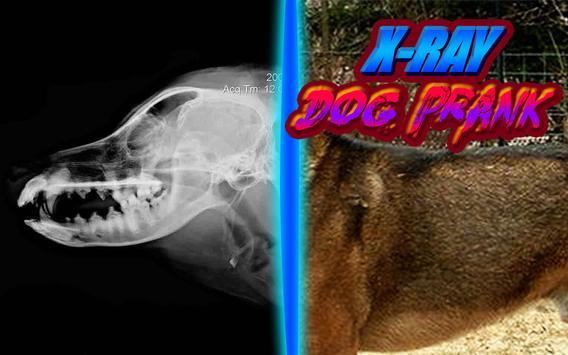 X-Ray Dog Joke screenshot 5