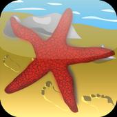 Starfish Game icon