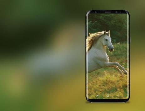 3D HD Live Horse Wallpaper apk screenshot