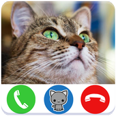 Call Video Cat Funny Cat For Android Apk Download