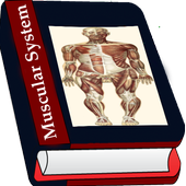 Muscular System icon
