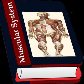 Muscular System screenshot 3