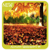 Autumn Wallpapers 4k icon