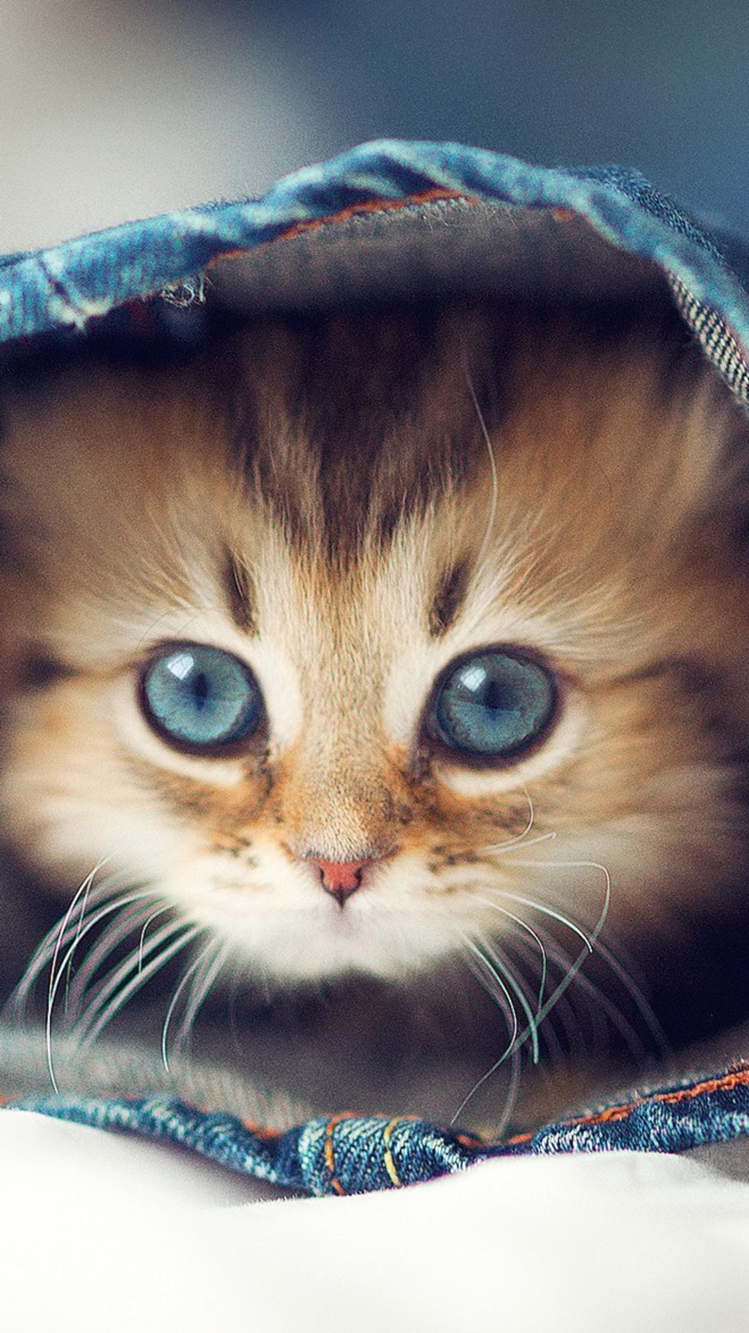 Cute Animals Wallpapers Hd For Android Apk Download