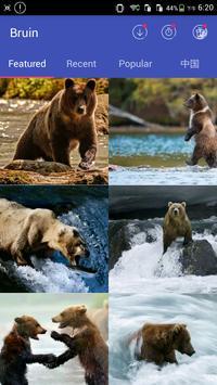 Bear Wallpapers apk screenshot