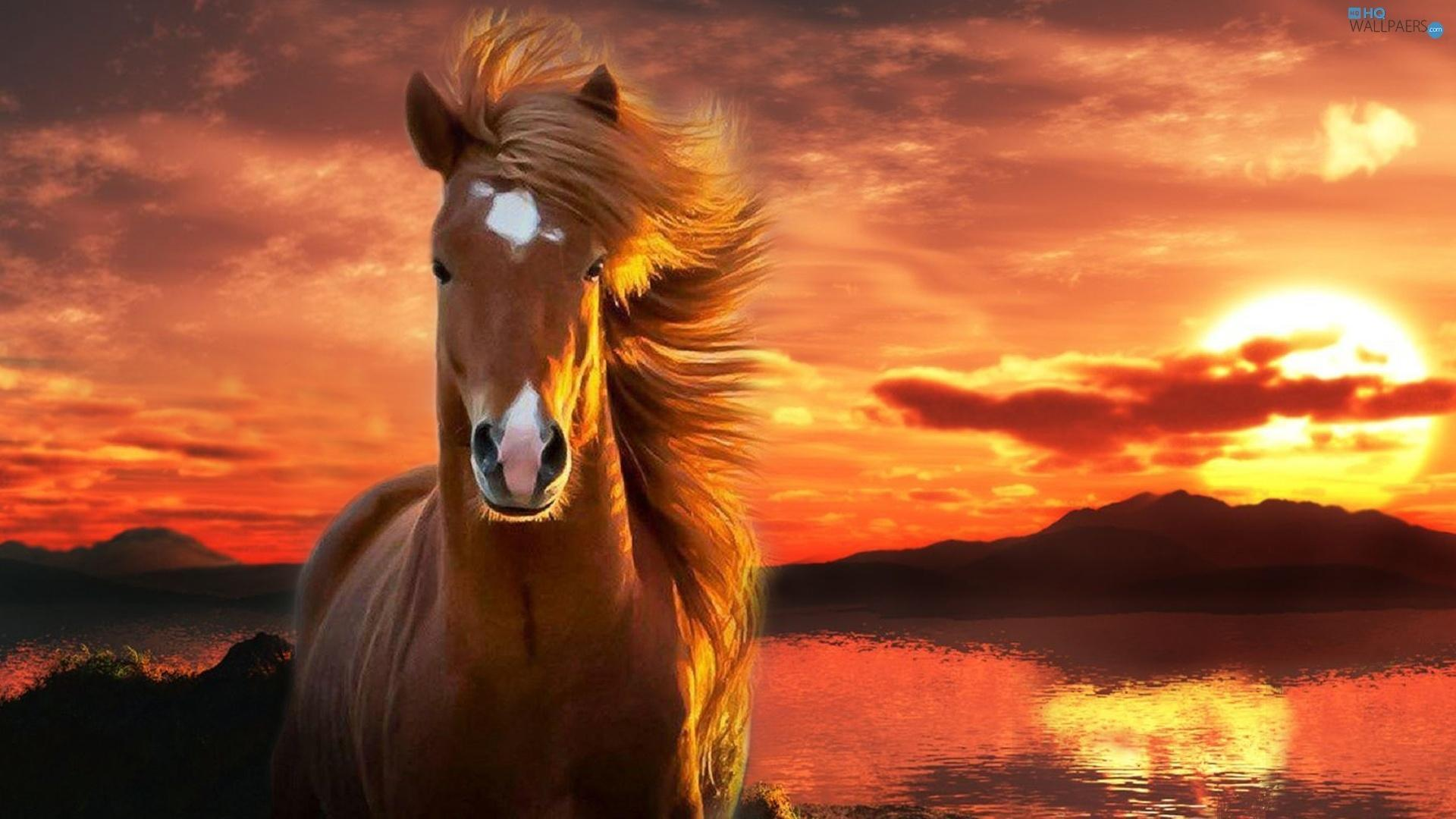 Free Horse Wallpaper For Android Apk Download
