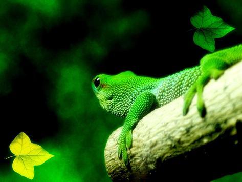 Lguana Wallpapers - Fancy Free apk screenshot