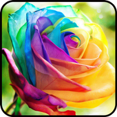 Fancy Colorful Wallpapers icon