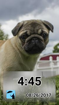 Daily - Pugs poster