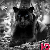 Black Panther Hd Wallpaper icon