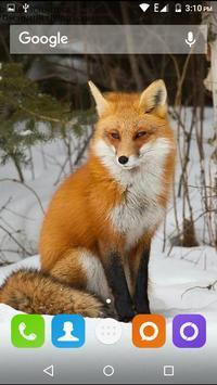 Cute Fox Wallpapers HD screenshot 21