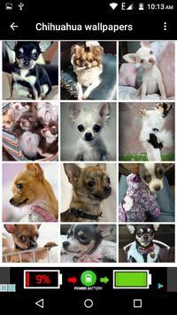 Chihuahua Dog Wallpapers Hd screenshot 8