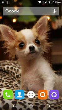 Chihuahua Dog Wallpapers Hd screenshot 13