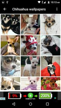 Chihuahua Dog Wallpapers Hd screenshot 22