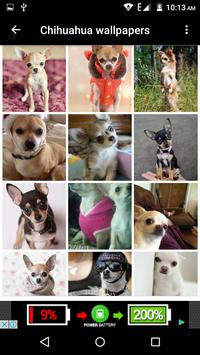 Chihuahua Dog Wallpapers Hd screenshot 2