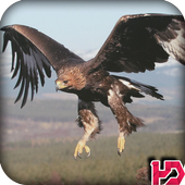 Eagle Wallpapers Hd icon