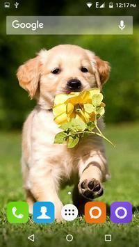 Golden Retriever Dog Wallpaper screenshot 11
