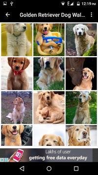 Golden Retriever Dog Wallpaper screenshot 22