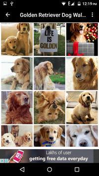Golden Retriever Dog Wallpaper screenshot 2
