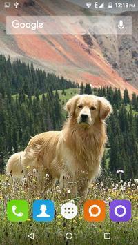 Golden Retriever Dog Wallpaper screenshot 7