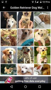 Golden Retriever Dog Wallpaper apk screenshot
