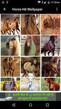 Horse Hd Wallpaper screenshot 12