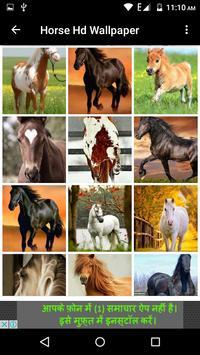 Horse Hd Wallpaper screenshot 14