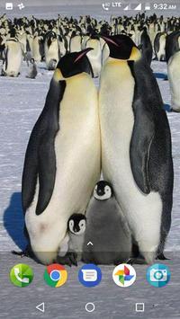 Penguin Wallpaper screenshot 7