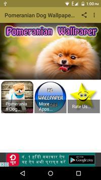 Pomeranian Dog Wallpaper Hd screenshot 16