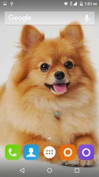 Pomeranian Dog Wallpaper Hd screenshot 18