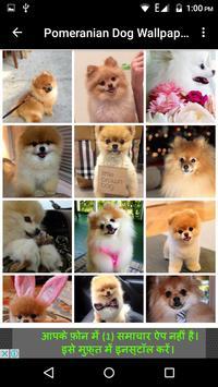 Pomeranian Dog Wallpaper Hd screenshot 3