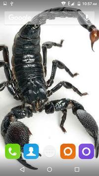 Scorpion HD Wallpaper screenshot 11