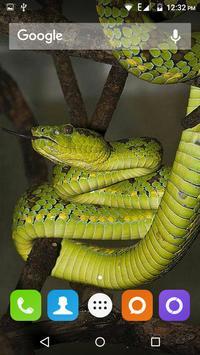 Snake Hd Wallpaper apk screenshot