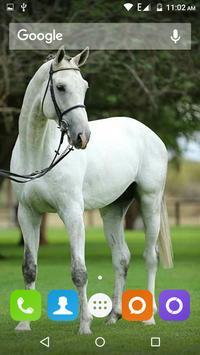 White Horse Hd Wallpapers screenshot 3