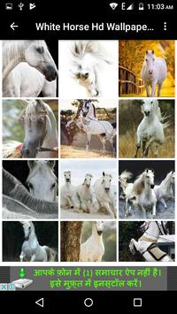 White Horse Hd Wallpapers apk screenshot