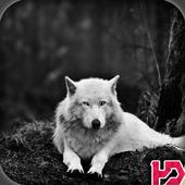 Wolf Hd Wallpaper icon