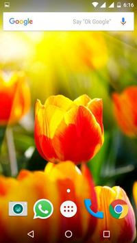 Tulips Flowers HD Wallpapers screenshot 4
