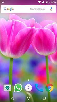 Tulips Flowers HD Wallpapers screenshot 6